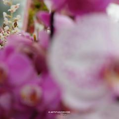 VincentvanGogh_Keukenhof_DSCF4138 (Dutch Design Photography) Tags: pink flowers red orchid flower netherlands dutch up yellow modern happy spring close post vincent zen tulip painter impressionism van moment gogh orchidee lente geel rood miksang bloemen keukenhof roze bloem spritual tulp impressionisme