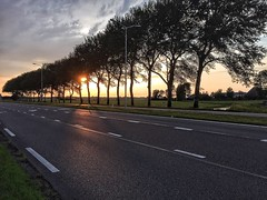 Trees (misha_haijtema) Tags: trees sun beautiful going down freeway sideline