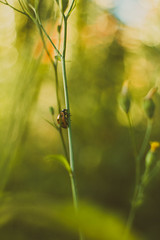climb (Be Good Be Bad Just Bee) Tags: macro nature animal insect flora outdoor ladybird dreamy
