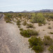 Ainda no Deserto de Sonora