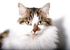 'Sophie' (Jonathan Casey) Tags: catchums chums white nikon rescue norfolk d810 105mm f28 vr