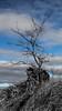 sleeping tree (keriarpi) Tags: sleeping tree winter sky black blue selective color