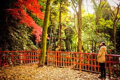 20161130-L1001001 (Mac Kwan) Tags: leica travel japan kyoto m240 color street