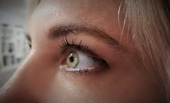 Macro Monday Eyeball - It's Alive (Spebak) Tags: spebak macromondays macromonday macro living yellow eye its alive