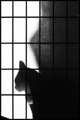 Shadow Cat (thisbrokenwheel) Tags: light animal pet snapseed monochrome canon contrast blackandwhite feline cat 50mm