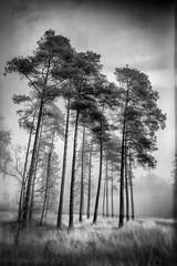 IMGP0545-Edit-2 (MGMOLLER) Tags: tree fog mist wet plate black white bnw monochrome mgmoller mgmollerdk pentax