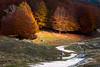 The path (luigig75) Tags: parconaturaleregionalemontisimbruini montelivata campodellosso bosco forest beechwood wood beech mountain fall colors foliage colori autunno lazio italia italy 70200f4l 70d canon canonef70200mmf4lusm