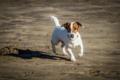 Sparky (nereaoroquieta) Tags: animal dog perro playa sol sparky sombra arena sand beach mascota pet