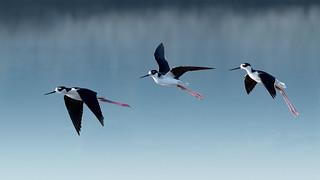 Stilts in Flight