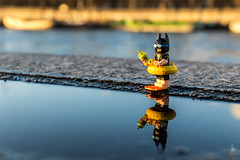 Batman on holidays (Ballou34) Tags: 2017 7dmark2 7dmarkii 7d2 7dii afol ballou34 canon canon7dmarkii canon7dii eos eos7dmarkii eos7d2 eos7dii flickr lego legographer legography minifigures photography stuckinplastic toy toyphotography toys paris îledefrance france fr batman dc comics dccomics reflection water seine 7d mark 2 ii eos7d stuck plastic buoy street dive leisure swimming pool duck