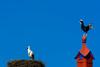 Stork versus Rooster (6/365, January 6th) (Yannis_K) Tags: portugal algarve stork roosterofbarcelos galodebarcelos project365 yannisk nikond7100 nikon70300mmf4556vr blueskies travelphotography cegonha nest chimney red