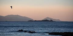 wonders of the red sky (Keith Midson) Tags: tasmania sunset sky birds sea seascape ocean bassstrait water boatharbour coast coastline shoreline
