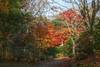 Colors in Matsushima (Kasimir) Tags: sendai matsushima japan nippon colors herbst autumm trees forest leaves temple