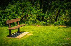 A place in the Sun... (NickyJameson) Tags: park light shadow toronto canada green nature beauty sunshine bench seat sony peaceful summertime bluffs summerlove scarboroughbluffs a7ii artphotograph nickyjamesonphotography