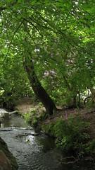 Hidden stream (Sutton Park) (zoekay) Tags: park trees nature birmingham suttoncoldfield suttonpark outsidespaces