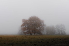 Making Heaps Digging Holes (vanderlaan.fotografeert) Tags: 201611269345 benneveld drenthe makingheapsdiggingholes autumn field fog landscape mist tree