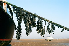 97190014 (WrittenOnTheForehead) Tags: 35mm analogue devon estuary boat sea coast