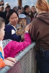 2188 Pass Through (mliu92) Tags: campverde arizona outofafrica zoo patagoniancavy figgy daughter