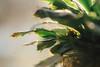 Cactus (Nancy Barton) Tags: plant cactus green light