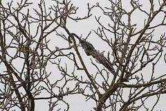Landed on a tree (dtroi17) Tags: outdoor winter tree baum regenschirm umbrella frozen frost