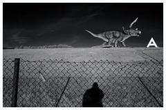 A Dinosaur Manston Kent (davemason) Tags: dinosaur manston kent mono infrared lumix g1 fence barrier sky boundary dmcg1