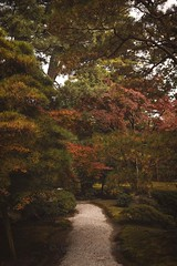 Path to a beautiful garden (Syahrel Azha Hashim) Tags: autumnseason autumn nature leaf sony 2016 fall holiday nopeople simple trees details nijicastle a7ii gravels ilce7m2 dof tree season garden getaway handheld 35mm colorimage vacation sonya7 prime light fallseason naturallight pathway colorful shallow beautiful travel syahrel seasonal colourfulleafs colors leafs park kyoto japan detail