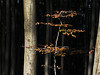 (Botond Pataki) Tags: nature forest tree trees light shadow contrast bole trunk branch branches foliage leaves autumn fall color orange hungary mátra