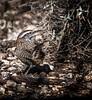 Spin Turn (Portraying Life) Tags: unitedstates arizona pima bird wild desert sonoran handheld nativelighting
