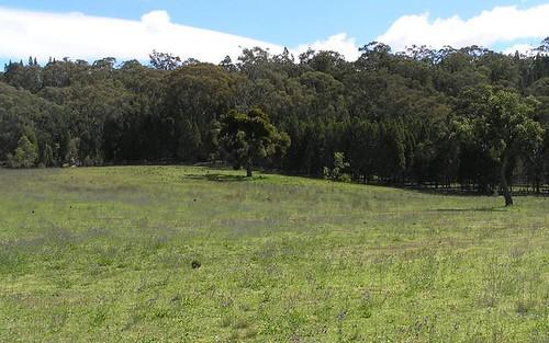 L5 Port Macquarie Road, Rylstone NSW