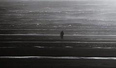Shadow play (plot19) Tags: blackandwhite britain british blackwhite nikon north northwest northern now blackpool man male sea seaside seascape mood light landscape photography plot19 england uk english