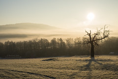 Winter morning at Sendelbach N°2 (Bernhard_Thum) Tags: bernhardthum thum nikond800e carlzeiss frankennature zf sendelbach earlymorning otus1455 distagonotus5514zf zf2 capturenature rockpaper