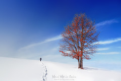 Días de nieve (Mimadeo) Tags: winter landscape tree autumn solitary lonely alone frozen person walking hiking hike walk trekking snow branches footprints trail track frost white ice nature cold branch season seasonal scene scenic beauty snowy christmas frosty red blue sky