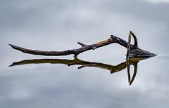 Double (Explored) (Eduardo Regueiro) Tags: reflejo reflection lago lake arrow concept pointing flecha
