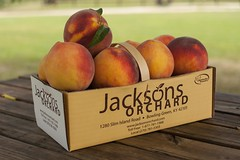 Cresthaven-8133 (Jackson's Orchard) Tags: kentucky peach orchard bowlinggreen bowlinggreenky cresthaven jacksonsorchard