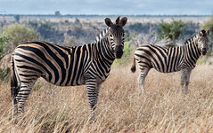 Copy & paste (staanie) Tags: africa travel k reisen pentax daniel south afrika 50 2015 schradi