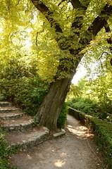 Marronnier au pied d'un escalier du cimetire du Pre-Lachaise (cl_p) Tags: paris escalier cimetire marronnier cimetireduprelachaise