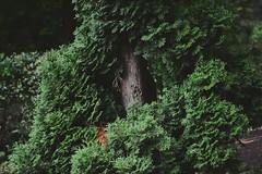 #wood #green #leafs (Teo_tea) Tags: wood green leafs