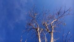 GammaP025 (Pieter Walkman) Tags: landscape branch harvest mojokerto pieterwalkman coinoboro xperiaphotography pieterww