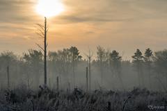Watching (KRLandscapes) Tags: a7r sunrise silhouette sun peakdistrict woodland plantation beeley moor landscape sony