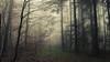 Thicket (Netsrak (on/off)) Tags: baum forst januar january landschaft natur nebel wald fog forest landscape mist nature tree trees winter woods bäume light licht rheinbach nordrheinwestfalen deutschland de