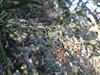 Ψίνθος (Psinthos.Net) Tags: ψίνθοσ psinthos winter january ιανουάριοσ γενάρησ χειμώνασ φύση εξοχή countryside nature afternoon απόγευμα απόγευμαχειμώνα χειμωνιάτικοαπόγευμα ουρανόσ sky βάτοι βάτα brambles bramble βάτοσ ξεράάνθη dryblossoms blossoms άνθη θάμνοσ shrub thorns αγκάθεσ leaves φύλλα winterleaves φύλλαχειμώνα χειμωνιάτικαφύλλα κλαδιά branches light shadow φώσ σκιά φώσήλιου φώσηλίου sunlight sunrays αχτίνεσήλιου valley psinthosvalley κοιλάδα κοιλάδαψίνθου κοιλάδαψίνθοσ φασούλι φασούλιψίνθοσ φασούλιψίνθου κοιλάδαφασούλι fasuli fasouli fasoulivalley fasoulipsinthos fasoulipsinthou μέρα day