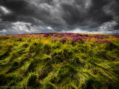 Green To Grey (Richard Walker Photography) Tags: beautiful beauty cloud clouds colorful countryside dramatic em1 farmland flora grass heather hillside hopevalley landscape landscapephotography omd peakdistrict