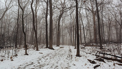 For Those That Like To Walk Alone (John Westrock) Tags: forest winter snow trees fog minookapark waukesha wisconsin midwest canoneos5dmarkiii canonef2470mmf28lusm oaktrees path trail