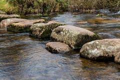 East Dart River (Bridgetony) Tags: dartmoor steppingstones