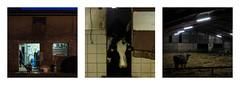 L'heure de la traite (Mathieu Calvet) Tags: pentax k3 sigma35art sigma 35 art 35mm f14 triptyque ferme vache cow triptych