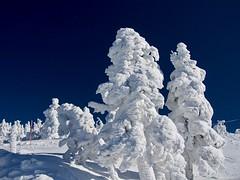 Ice monsters (murozo) Tags: ice monster snow ski area ani kitaakita akita japan winter tree sky 樹氷 アイスモンスター 雪 冬 阿仁スキー場 森吉山 北秋田 秋田 日本 木 空