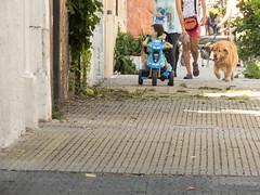 365-19 (Letua) Tags: verano paseo mascota perro niño barrio summer neighborhood dog pet boy