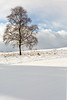 Perfect Snow (matrobinsonphoto) Tags: pitlochry scotland uk great britain british landscape outdoors landscapes winter wintry light sunlight countryside weather frozen tree snow trees field rural cold scenic beautiful sunlit calm golf course lone golden hour