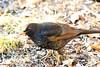 J78A0197 (M0JRA) Tags: rspb oldmoor birds lakes woods walks trees ponds fields grass hedges foot paths