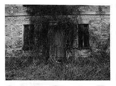 Boschi di Carrega (Alice Borciani) Tags: bw house tree film alberi darkroom casa olympus parma ilford pellicola stampa cameraoscura rampicanti salabaganza